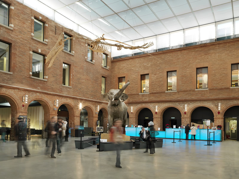 musee a toulouse
